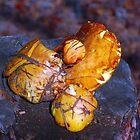 mushrooms on the stump macro by Eduard Isakov