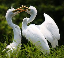 Egret Siblings by Paulette1021