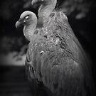 dark vultures by womoomow