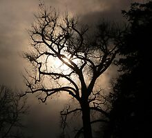 """Mysterious Night Lighting Behind Barren Tree"" by dfrahm"