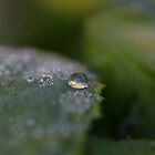 Dewdrop diamonds and Dandelions 2 by Barbara  Glover