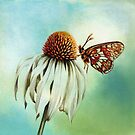 Fritillary on Echinacea by Helen Lush