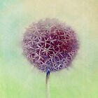 Allium flower head by Helen Lush