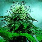 Cannabis Bliss by FloraDiabla