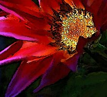Gaddazzlin' Gazania by paintingsheep