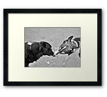 Collie Kisses Framed Print
