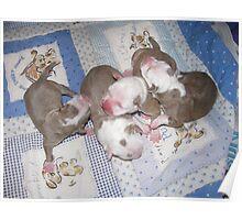 Precious Newborns Poster