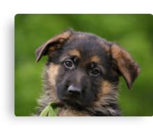 German Shepherd Puppy Close-up Canvas Print