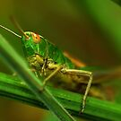 Grasshopper by Russell Couch