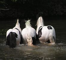 Three Lovely Rumps by Kat Simmons