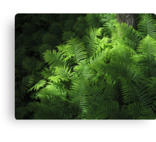 Forest Ferns 2 Canvas Print