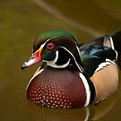 Portrait Of A Wood Duck by Jeff Weymier