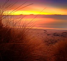 Tussocks - Jubilee Beach, Swansea, Tasmania (HDR) by PC1134