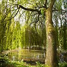 The Willow Tree by Paul Moore