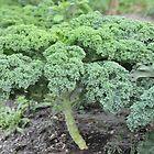Okeechobee Farms - Greens by Eat  Real Food