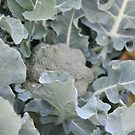 Okeechobee Farms - Broccoli Plant by Eat  Real Food