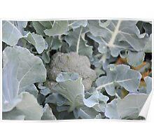 Okeechobee Farms - Broccoli Plant Poster