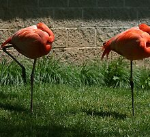 A pair of pink flamingos by wolf6249107