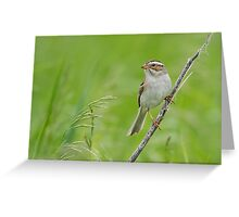 Clay-colored Sparrow in grassy habitat. Greeting Card