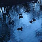 """Ducks On Twilight Blue Pond"" by dfrahm"
