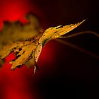 """""""Autumn Hues"""" Stanthorpe Qld by Ohlordi"""