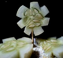 cucumber slices by mariatheresa