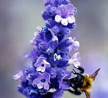 Honey Bee Feeding by Darren Burroughs