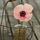 basket of poppy by Carine LUTT