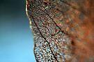 Natural lace by Adam Le Good
