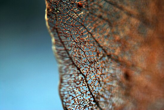 Natural lace by Adam Le Good