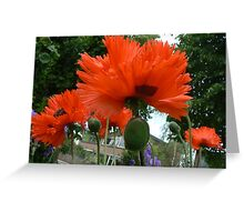 papaver and school Greeting Card