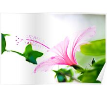 Hibiscus painting... Poster