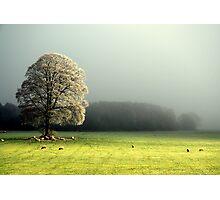 """LIGHT THROUGH THE MIST"" Photographic Print"