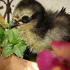 Frizzle Chick in the Flowers by angelandspot