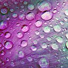 A Rainbow of Waterdrops by Jennifer Hulbert-Hortman