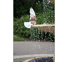 pigeon on a fountain Photographic Print