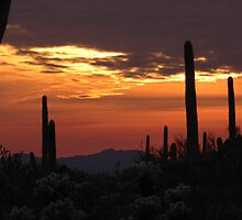 Saguaro sunset collection #11 by Dan Perry