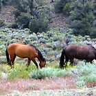 Mustangs At Ease by marilyn diaz