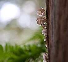 white fungi on gum by Hege Nolan
