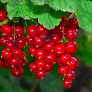 red currants by Steve