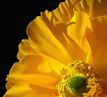 Yellow by Mieke Boynton