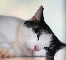 Sleepy Kitty by DebbieCHayes