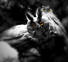 Long eared owl by Jason Feather