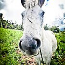 Horse in the field - Sulawesi by shellfish