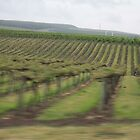 Traveling through the Grape Vines... by EvaMarie Cannon