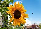 Sunflower by Yelena Rozov