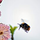 Cherry blossoms and  bees ... by Gregoria  Gregoriou Crowe