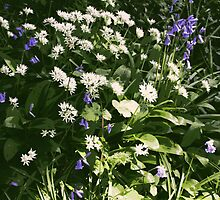 Wild Garlic in the garden by CliveOnBeara
