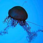 Sea Nettle by Michelle Callahan