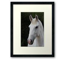 Horse 9012 Framed Print